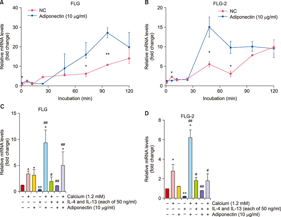 The Effect of Adiponectin on the Regulation of Filaggrin